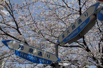 2014sakura_okazaki_06.jpg
