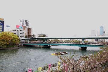 2014sakura_osaka_01.jpg