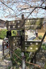 2014sakura_tetsugaku_road_14.jpg