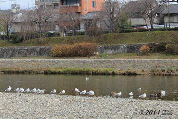 kamogawa2014-01_02.jpg