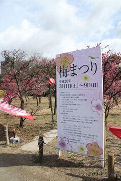 umeko-ji_umematsuri2014_03.jpg